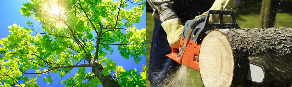 Tree Services Commerce City